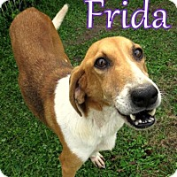 Adopt A Pet :: Frida - Georgetown, SC