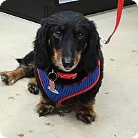 Adopt A Pet :: R.J. - San Antonio, TX