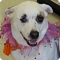 Adopt A Pet :: Sara - Scottsdale, AZ