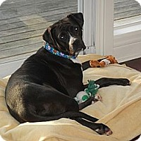 Adopt A Pet :: Bella - Hamilton, ON