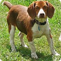 Adopt A Pet :: Obie - Palm Bay, FL
