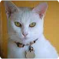 Adopt A Pet :: Chelsea - Marietta, GA