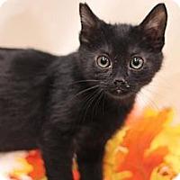 Adopt A Pet :: Boo! #2 - Sacramento, CA