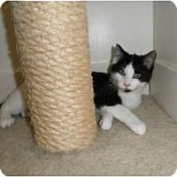 Adopt A Pet :: Cookie - Milwaukee, WI