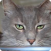 Adopt A Pet :: Cutie - N. Berwick, ME