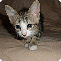 Adopt A Pet :: Fiona - Norwich, NY