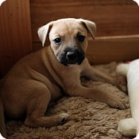 Adopt A Pet :: Butters - Long Beach, CA