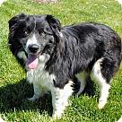 Adopt A Pet :: LASSIE