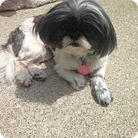 Adopt A Pet :: Dizzy - Elkhart, IN