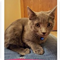 Adopt A Pet :: Chance - McHenry, IL