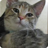 Adopt A Pet :: Dusty - Witter, AR