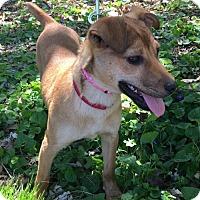 Adopt A Pet :: Miney - Christiana, TN
