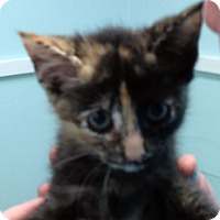 Adopt A Pet :: MERIDA - Putnam Hall, FL
