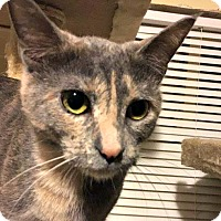 Adopt A Pet :: Charlotte - Indianapolis, IN