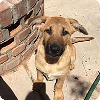 Adopt A Pet :: Vista - Phoenix, AZ