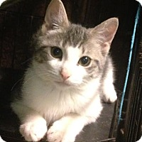 Adopt A Pet :: Marley - East Brunswick, NJ