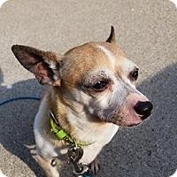 Adopt A Pet :: Beans - Garden City, MI