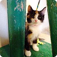 Adopt A Pet :: Missy - Belleville, MI