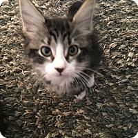 Adopt A Pet :: Nadia - Mount Laurel, NJ