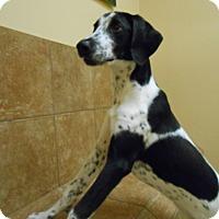 Adopt A Pet :: Mertzy *Petsmart GB* - Appleton, WI
