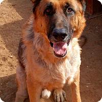 Adopt A Pet :: TIGER - Valley Village, CA