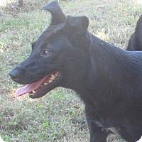 Adopt A Pet :: ROXY - Jackson, MO