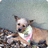 Adopt A Pet :: Petunia - Boerne, TX