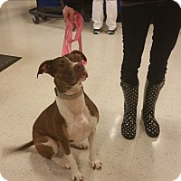 Adopt A Pet :: Ada - Richmond, VA