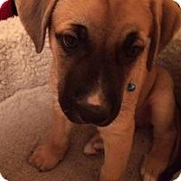 Adopt A Pet :: Mr. Magoo - Regina, SK