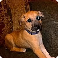 Adopt A Pet :: Dale - Kyle, TX