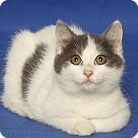 Adopt A Pet :: GUNTHER - Gloucester, VA