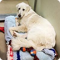 Adopt A Pet :: Sophie - Santa Maria, CA