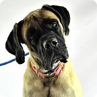Adopt A Pet :: Paul - Goodyear, AZ