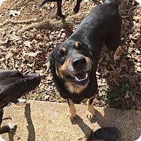 Adopt A Pet :: Besse - North Brunswick, NJ