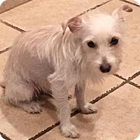 Adopt A Pet :: Pearly - Spring, TX
