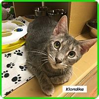 Adopt A Pet :: Klondike - Miami, FL