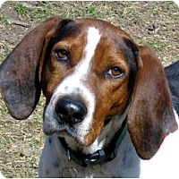 Adopt A Pet :: Peter - Jacksonville, FL