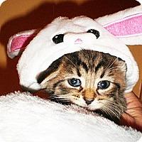 Adopt A Pet :: Georgia - Xenia, OH