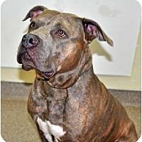 Adopt A Pet :: Tyson - Port Washington, NY
