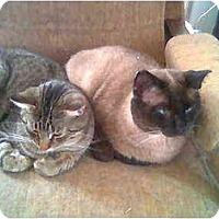 Adopt A Pet :: Bert - Proctor, MN