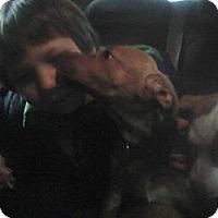 Adopt A Pet :: Jingle - Rome, NY