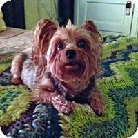 Adopt A Pet :: Bowie - Bemidji, MN