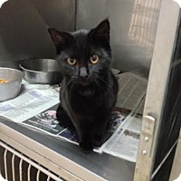 Adopt A Pet :: Ambrose - Lancaster, VA