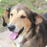 Adopt A Pet :: Henry-adoption pending - Norwalk, CT
