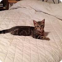 Adopt A Pet :: Kale - Turnersville, NJ