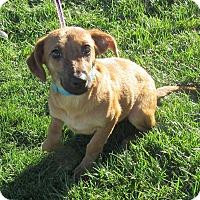 Adopt A Pet :: Rusty - New Oxford, PA