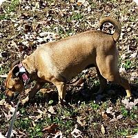 Adopt A Pet :: Mona - Normandy, TN
