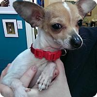 Adopt A Pet :: Franchesco - Thousand Oaks, CA