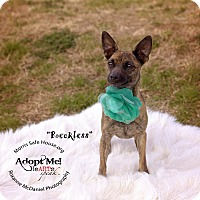 Adopt A Pet :: RECKLESS - Lubbock, TX