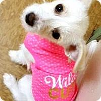 Adopt A Pet :: Wilma-ADOPTION PENDING - Boulder, CO